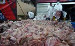 2,8 Ton Daging Celeng Disita dari Penyelundup