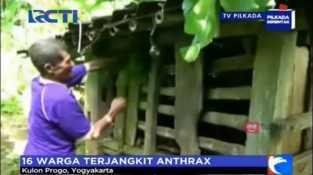 16 Warga Kulon Progo Postif Terjangkit Anthrax