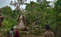 Satu Meninggal Tertimpa Pohon saat Angin Kencang Terjang Aceh Selatan