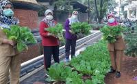 Suku Dinas KPKP Jakarta Timur Panen Hasil Urban Farming