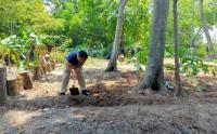 Warga Pulau Seribu Manfaatkan Lahan untuk Bercocok Tanam
