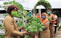 Panen Sayuran Pakcoy di Halaman Pemkot Jakpus