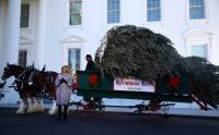 Melania Trump Sambut Kedatangan Pohon Natal Setinggi 5,6 Meter di Gedung Putih