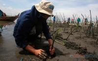 Aksi Tanam Mangrove di Pantai Tirang Tapak Tugu Semarang