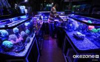 Penjual Ikan Hias Tetap Bertahan di Tengah Hantaman Pandemi Covid-19