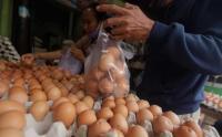 Ini Penyebab Harga Telur Turun