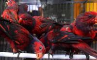 Karantina Pertanian Surabaya Sita Burung dan Kura-Kura Asal Makassar