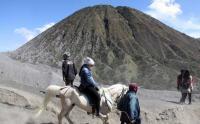 Jasa Penyewaan Kuda Menuju Puncak Gunung Bromo