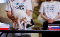 Kucing Ini Memprediksi Pemenang Laga Polandia vs Slovakia