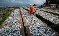 Produksi Ikan Asin di Pulau Sabira Menurun Imbas Cuaca yang Kurang Baik
