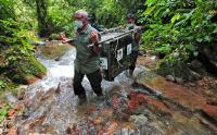 Perjuangan Petugas BKSDA Jambi Lepas Liarkan Tapir dan Siamang di Taman Nasional Kerinci