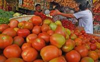 Pasokan Berkurang, Harga Tomat Melonjak
