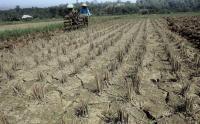 BMKG: 70 Persen Wilayah Indonesia Sudah Masuk Musim Kemarau