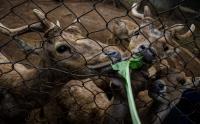 Kebun Binatang di Bandung Dapat Bantuan Sayuran untuk Makan Satwa