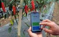 Sadar Teknologi, Petani di Bali Gunakan Aplikasi untuk Pantau Hasil Kebunnya