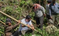 Relawan MNC Peduli Gotong Royong dengan Warga Perbaiki Jembatan dan Bantu Panen Kopi di Kampung Cisadon Bogor