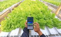 Petani Indramayu Manfaatkan Teknologi Digital untuk Bertani