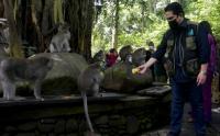 Objek Wisata Monkey Forest Bali Terima Bantuan Pakan
