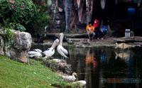 Wahana Taman Burung TMII Mulai Dibuka untuk Rekreasi, Pengunjung Wajib Terpakan Prokes Ketat