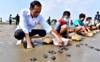 Sambil 'Nyeker' Presiden Jokowi Lepas Tukik di Pantai Kemiren Cilacap