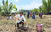 Kunjungan ke Cilacap, Presiden Jokowi Tanam Mangrove Bareng Masyarakat