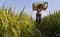 Realisasi KUR Pertanian per September 2021 Capai Rp56,3 Triliun
