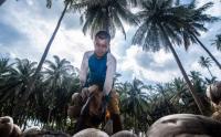 Produksi Kelapa di Pulau Laut Natuna Melimpah Ruah