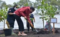 Presiden Tanam Mangrove di Pantai Wisata Raja Kecik