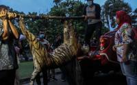 Mengenaskan, Harimau Sumatera Mati Terjerat Sling