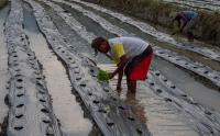 Ini Alasan Petani di Palu Beralih Tanam Cabai Rawit