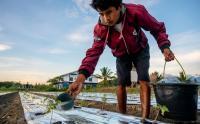 Biaya Produksi Meningkat, Petani Desa Lolu Sigi Kesulitan Dapatkan Pupuk Bersubsidi