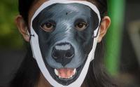 Aksi Solidaritas untuk Anjing Canon