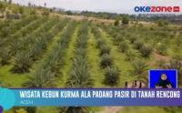 Indahnya Wisata Kebun Kurma di Aceh