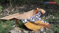 Gemparkan Warga, Peti Mati Hanyut di Sungai Bondoyudo Jember