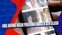 Viral, Harimau Masuk Perkebunan Warga di Aceh Selatan