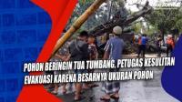 Pohon Beringin Tua Tumbang, Petugas Kesulitan Evakuasi karena Besarnya Ukuran Pohon
