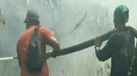 Polisi Tangkap Pembakaran Puluhan Hektare Lahan Gambut di Jambi