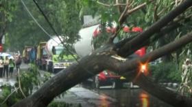 Belasan Pohon Tumbang dan SPBU Porak-poranda Diterjang Puting Beliung
