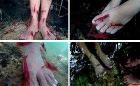 Mitos Udang Merah Tolitoli, Mampu Menyembuhkan Penyakit
