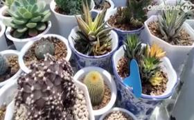 Penjual Kaktus Meraup Rezeki di Tengah Pandemi