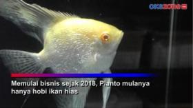 Ternak Ikan Hias, Pemuda Ini Raup Untung Rp20 Juta per Bulan