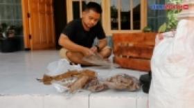 Sampah Daun Ketapang Diburu Penghobi Ikan Hias