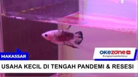 Indonesia Resesi, Pebisnis Warkop Beralih Jual Ikan Hias