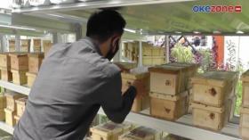 Cara Mudah Budidaya Lebah Klanceng, Pendulang Rupiah di Tengah Pandemi