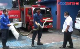 Ular Sanca Masuk Rumah Anggota DPRD Kota Tangerang