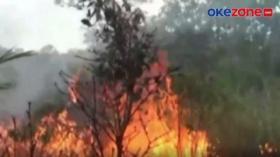 60 Hektare Lahan Gambut Milik Petani Terbakar