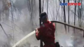 Ratusan Hektare Lahan Gambut di Bengkalis Terbakar