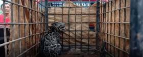 Macan Dahan Mangsa 5 Kambing Milik Warga