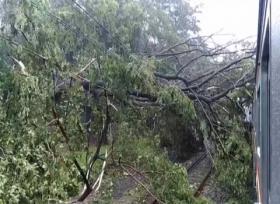Kereta Tertimpa Pohon di Kawasan Kebayoran Lama