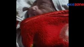 Bayi Dibuang Ditemukan di Dasar Sungai